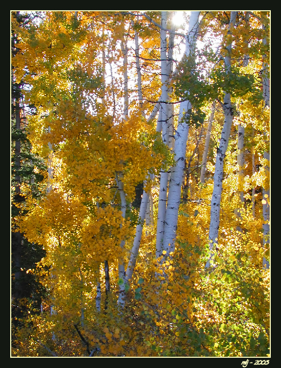 Bloomington Lake Aspens