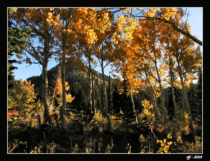Bloomington Peak In Fall