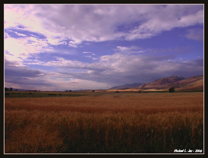 August Wheat Fields